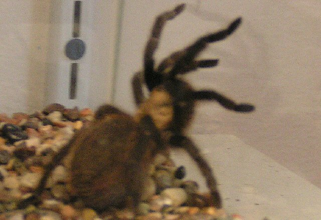 if you want to see large spiders like that in a basement please go to
